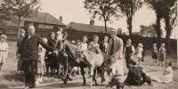 Miss Etherington delivers Exmoor ponies to Maryon Wilson Park.