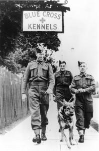 Blue Cross Kennels